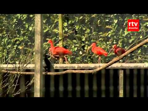 17 april - vogelpark ruinen in schier - youtube