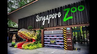 A Visit to Singapore Zoo (2017)