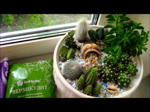 Оформление моей коллекции кактусов.