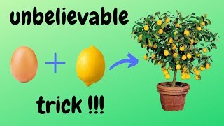 ☑️ how to grow lemon tree from seed 🍋 - unbelievable trick 🌳