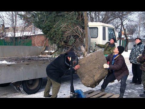 перевозка саженцев по России СНГ
