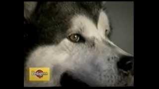 Alaskan Malamute - il documentario