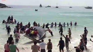 Beachgoers rescue beached humpback whale in Brazil
