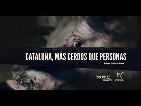 Cataluña, más cerdos que personas
