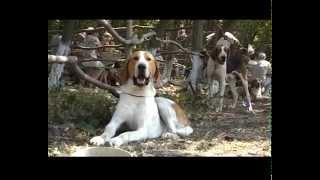 Республиканская выставка охотничьих собак, УТМР, 2012 (UKR)