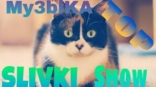 5 Песен которые использует канал Slivki Show