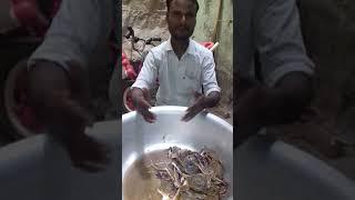Fishman talking english