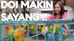 Hobi Yang Menghasilkan Jadi Usaha Sampingan, Doi Makin Sayang! Ternak Lovebird Aja, Rawatan Simple!