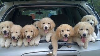 Funniest Cute Puppies Compilation February 2013