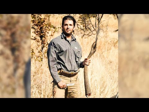 Trump Lifts Elephant Trophies Ban For His Douchebag Son