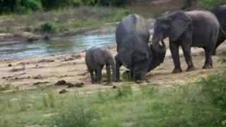 Elephants in Yankari Game Reserve