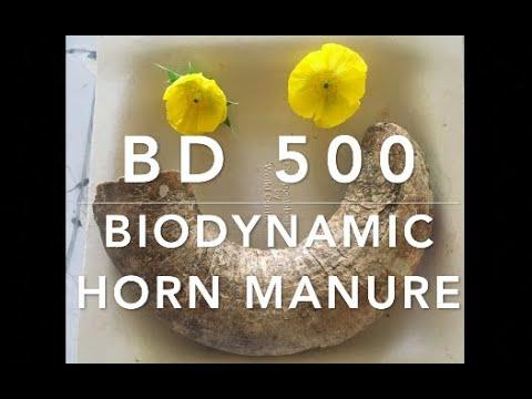 Buddha & Biodynamic Farming: How to Grow Organically in Poor Sandy Soils (BD500) 🙌🏽