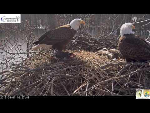 The Trio Eagles - Saturday morning - 04-01-17