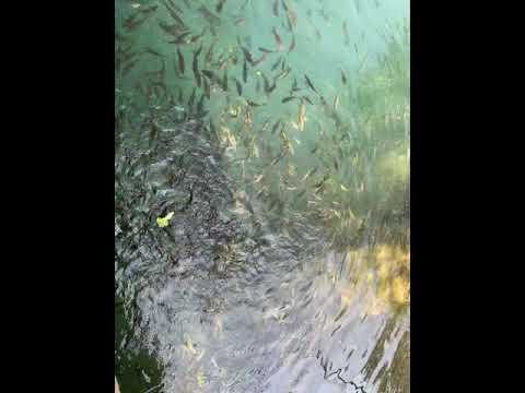 Vang Vieng 2021 - Aquarium in Vang Vieng 2021 Laos