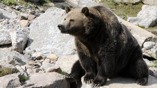 Wyoming approves first grizzly hunt in 44 years