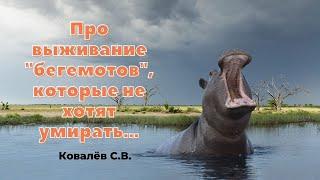 """""""Про выживание """"бегемотов"""", которые не хотят умирать..."""" Ковалев С.В."""