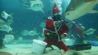Scuba-Diving Santas Feed a Tank Full of Sharks Tasty Holiday Treats
