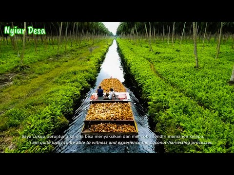 HEAVEN OF COCONUTS - Indonesia Largest Coconut Farm Modern Processing Agriculture Techonolgy