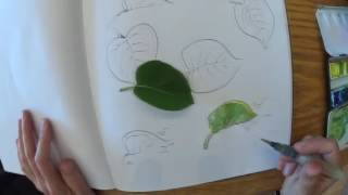 Tips & tricks for drawing leaves