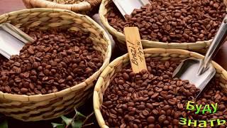 арабика или Робуста - какой КОФЕ предпочитаете вы?