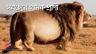 সবেচেয়ে খাদক ৯টি প্রাণী যারা জানেনা কখন খাওয়া থামাতে হবে !! 9 Extraordinary Animals