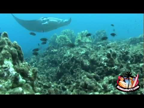 Maui Marinelife - Maui Hawaii