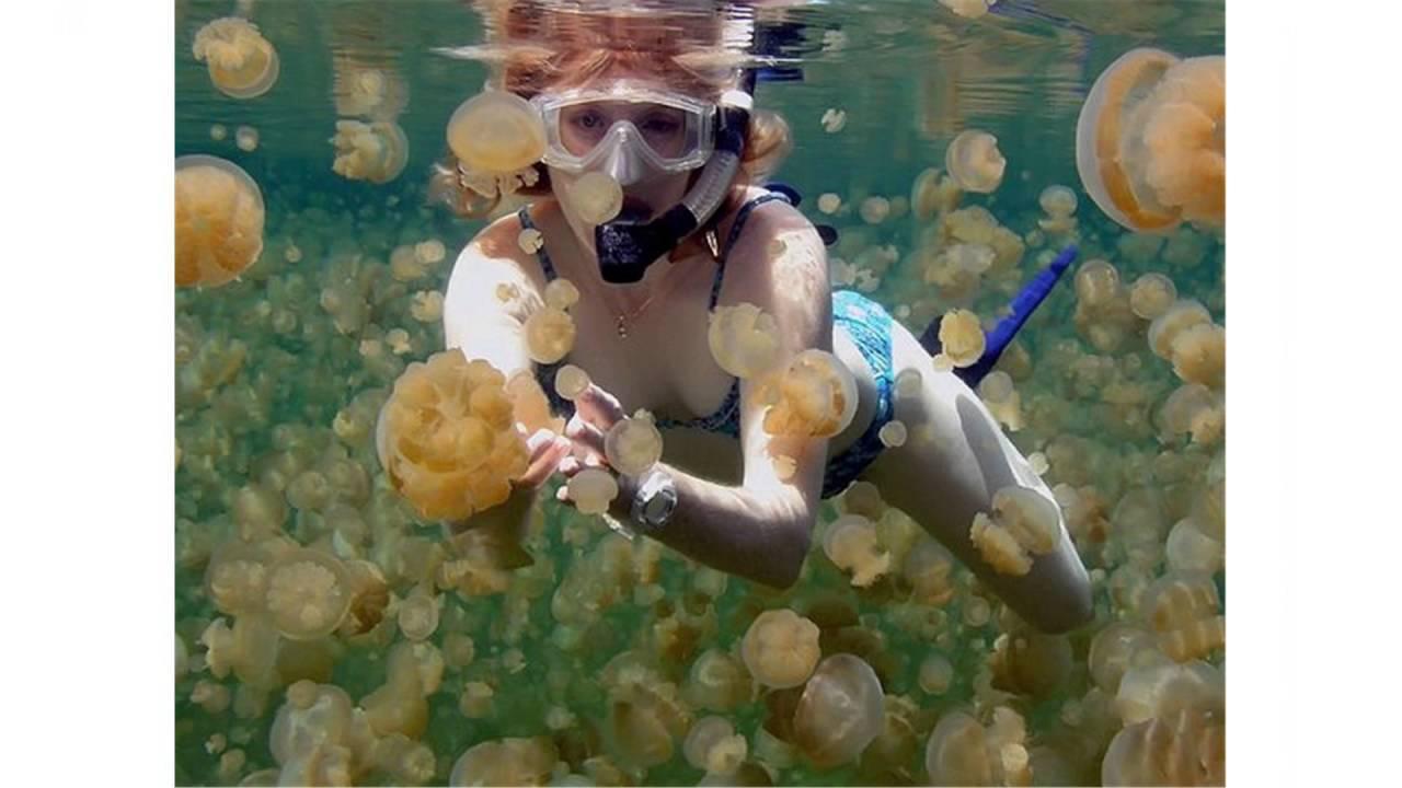 Freshwater jellyfish lake youtube for Lake degray fishing report