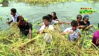 Pokkali rice cultivation
