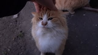 Cute cat wants only massage