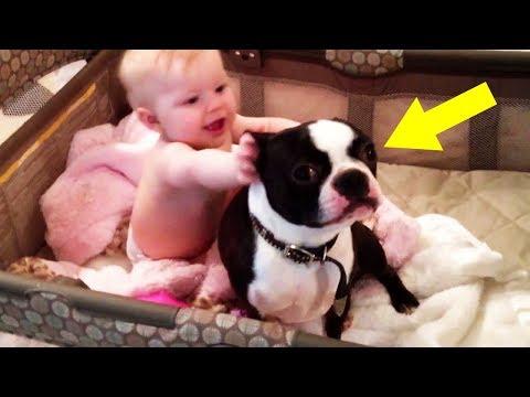 Der Hund wollte nicht aus dem Bett des Babys, was dann passiert kam unerwartet