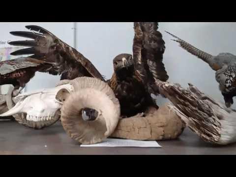 Ely Nevada Museum...interesting!