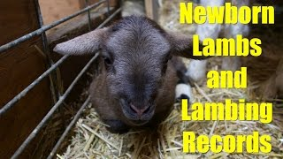 Newborn Lambs and Lambing Records