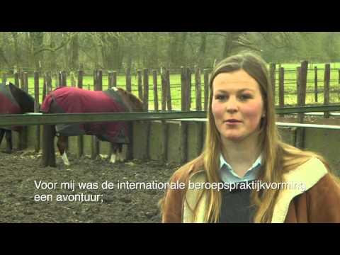 Groene Welle goes international | Caroline about Ireland