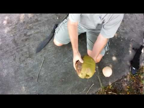 how to open a coconut husk without tools