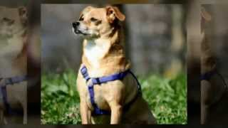 Dog Obedience Training San Diego Pet Obedience Training