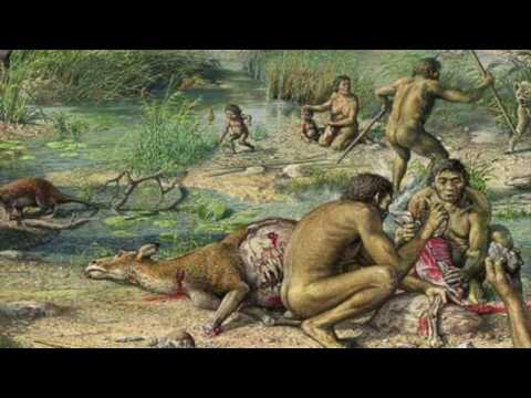 Human origins TA lecture: fire and early hominin evolution