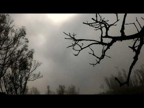 Nature HD Video