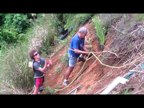 The Vetiver System.Planting at Kerikeri, Bay of Islands New Zealand