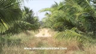 farm agriculture  land  for sale in tirunelveli tamil nadu tirunelveli real estate