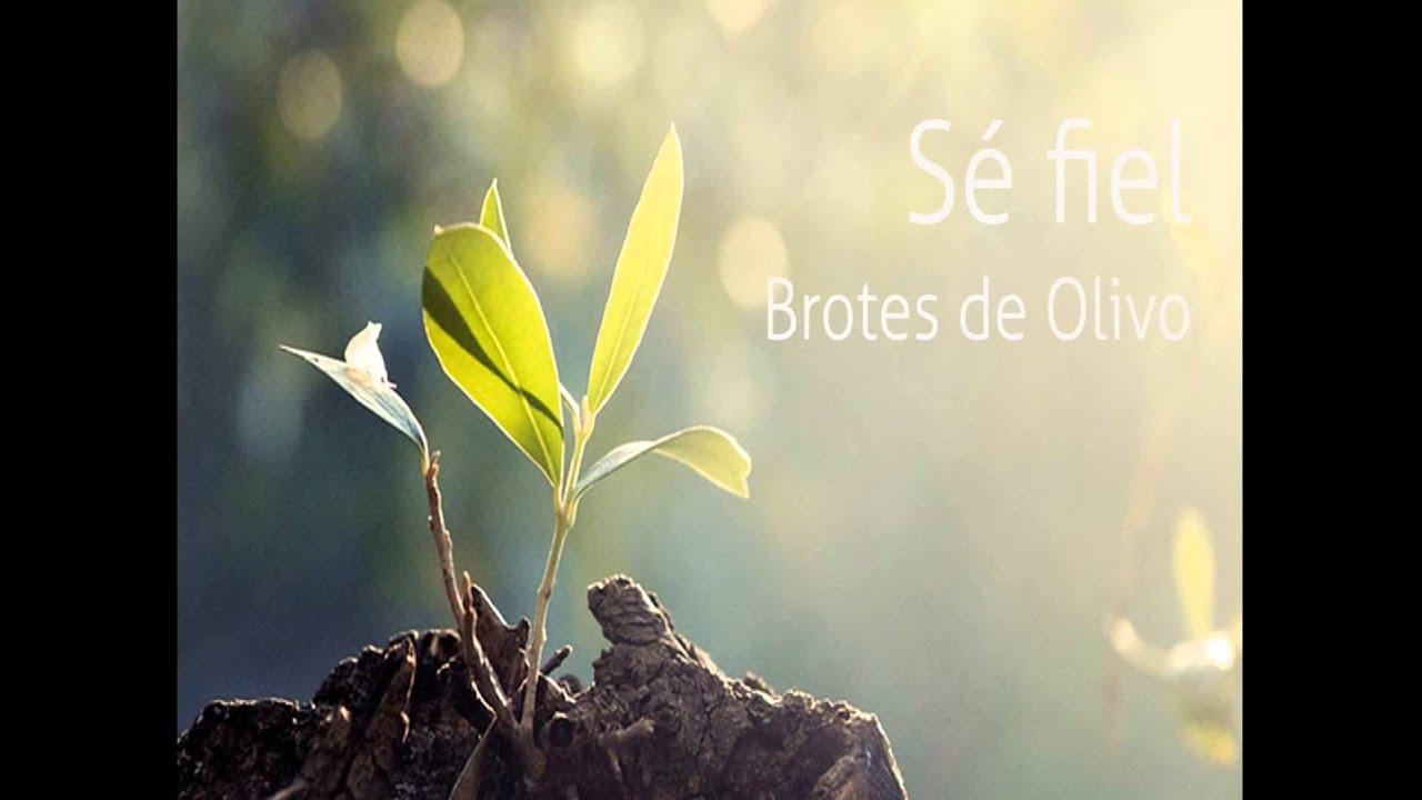enviame brotes de olivo
