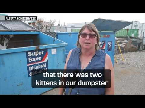 Kittens rescued from sealed box found in Calgary dumpster