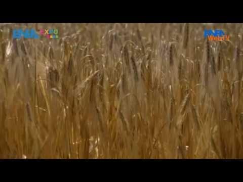 ENEA WebTV - Gli OGM e il dibattito su sicurezza alimentare, salute e ambiente