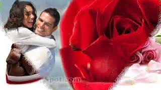 valentine day rose wallpaper hd