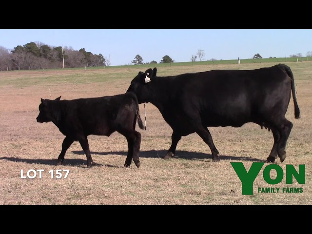 Yon Family Farms Lot 157