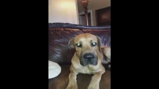 【衝撃は23秒後!】口の大きな大型犬のワンちゃんが口の中に隠していたのは・・・?