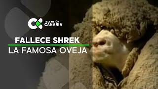 27 kilos de lana de la misma oveja (Noticias curiosas) Buenos Días Canarias
