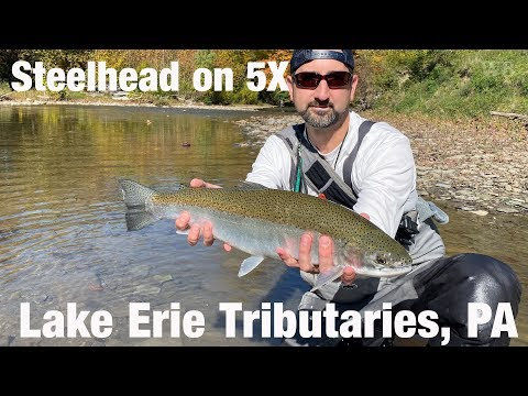 WB - Steelhead On 5X, Lake Erie Tributaries, PA - October '19