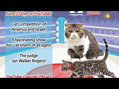Cat Show 'American and Israeli cats'