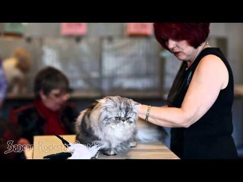 TICA's Kim Tomlin and Pamela Barrett judging Persians