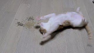 고양이 마약, 캣닢가루 첫 경험